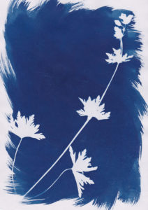 Photogramme au Cyanotype_09