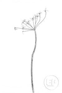 Nature-Morte-Plantes_Esplanade-Photo_06
