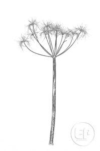 Nature-Morte-Plantes_Esplanade-Photo_08