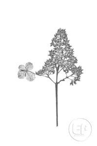 Nature-Morte-Plantes_Esplanade-Photo_10